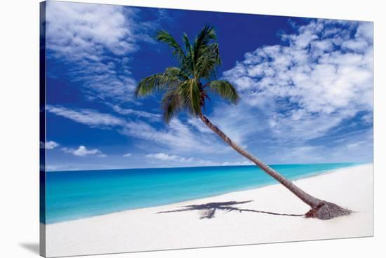 Tropical Leaning Palm Tree--Stretched Canvas Print