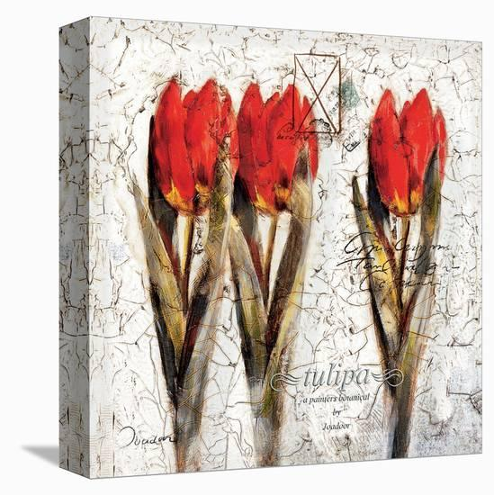 Tulipa Formation-Joadoor-Stretched Canvas Print