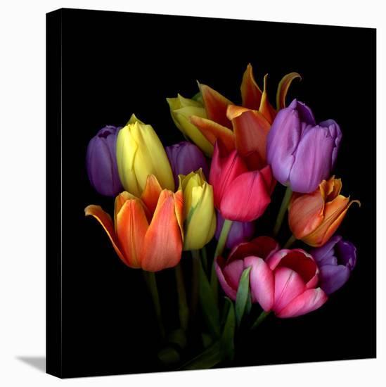 tulips-Magda Indigo-Stretched Canvas Print