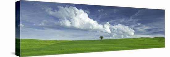 Tuscan Field Single Tree-Richard Desmarais-Stretched Canvas Print