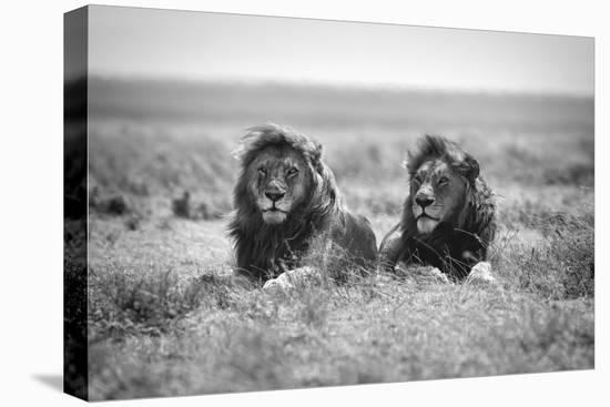 Two Kings-Nicolas Merino-Stretched Canvas Print