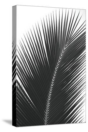 Palms, no. 14-Jamie Kingham-Stretched Canvas Print