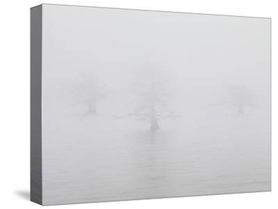 Three Quiet Trees-Derek Jecxz-Stretched Canvas Print