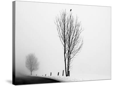 The Messenger-Ily Szilagyi-Stretched Canvas Print
