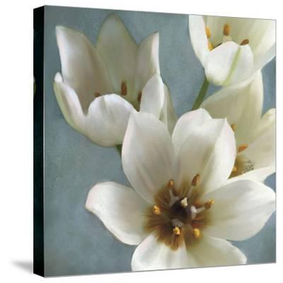 Lily Parfait II-Janel Pahl-Stretched Canvas Print