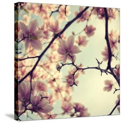 Pink Blossoms-Irene Suchocki-Stretched Canvas Print