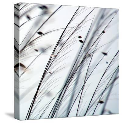 Organic II-Tony Koukos-Stretched Canvas Print