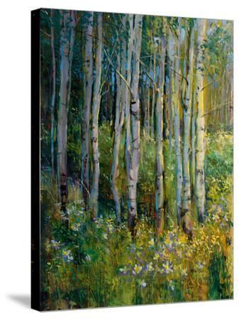 Aspens in Spring-Patrick-Stretched Canvas Print