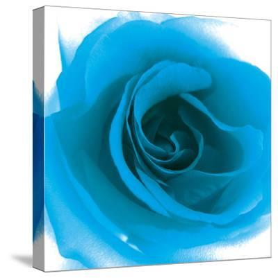 Blue Summer Petals-Katja Marzahn-Stretched Canvas Print