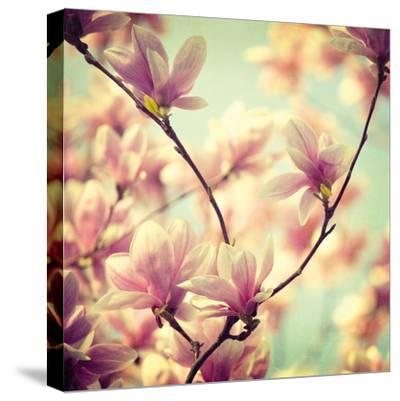Magnolia Bloom I-Irene Suchocki-Stretched Canvas Print