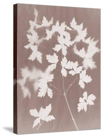 Spray in Grey-Sarah Cheyne-Stretched Canvas Print