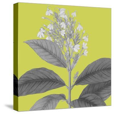 Botaniska V-Maria Mendez-Stretched Canvas Print