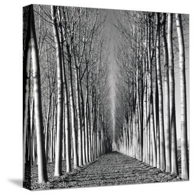 Vanishing Point-Hakan Strand-Stretched Canvas Print