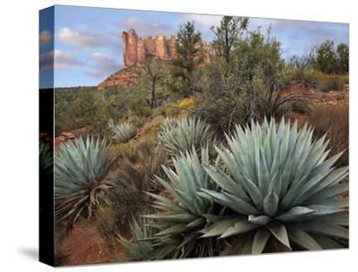 Agave and Coffee Pot Rock near Sedona, Arizona-Tim Fitzharris-Stretched Canvas Print