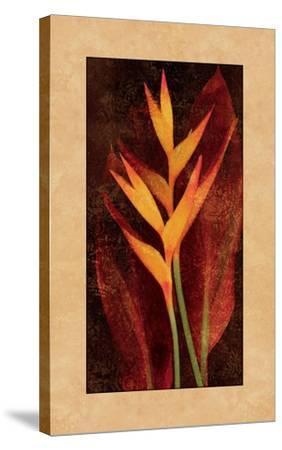 Heliconia-John Seba-Stretched Canvas Print