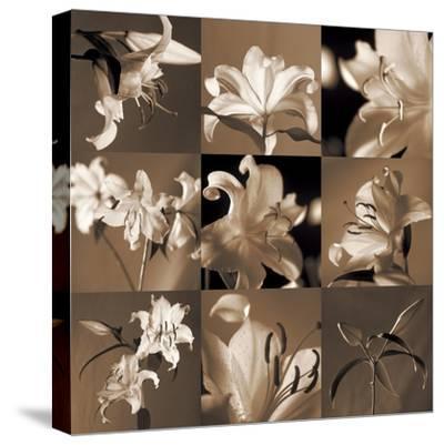 Lily Garden-Caroline Kelly-Stretched Canvas Print