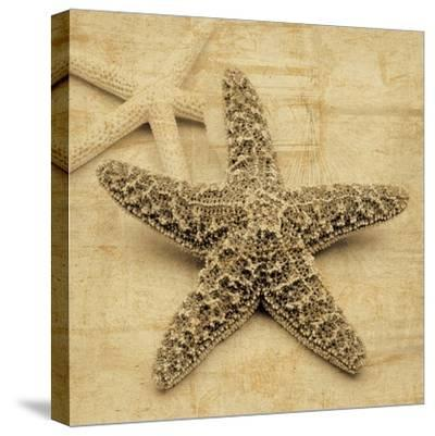Starfish-John Seba-Stretched Canvas Print