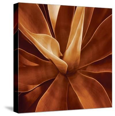 Santa Fe II-Caroline Kelly-Stretched Canvas Print