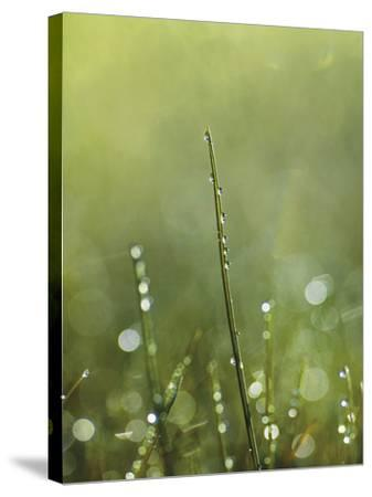 Dew-Andreas Stridsberg-Stretched Canvas Print
