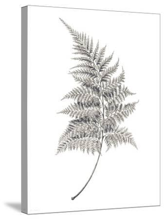 Fern Frond I-Hilary Armstrong-Stretched Canvas Print