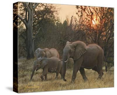 Sundown Elephants-John Mullane-Stretched Canvas Print