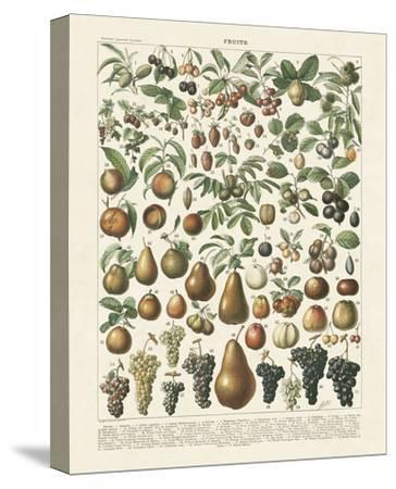 Fruits II-Adolphe Millot-Stretched Canvas Print