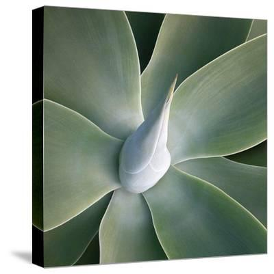 Succulent Tip-Jan Bell-Stretched Canvas Print