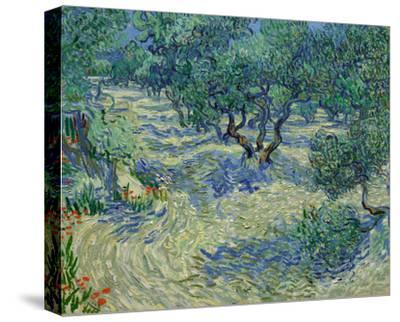 Olive Orchard, 1889-Vincent van Gogh-Stretched Canvas Print