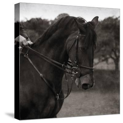 Dressage - The Collection-Pete Kelly-Stretched Canvas Print