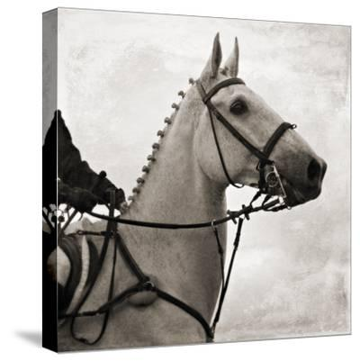 Dressage - The Counter-Pete Kelly-Stretched Canvas Print
