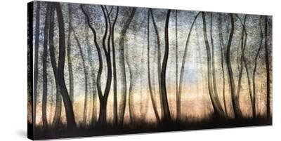 Silver Forest-Graham Reynolds-Stretched Canvas Print