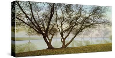 Silhouetts In Fog-Loren Soderberg-Stretched Canvas Print