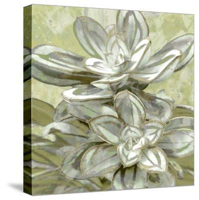 Succulent Verde IV-Lindsay Benson-Stretched Canvas Print
