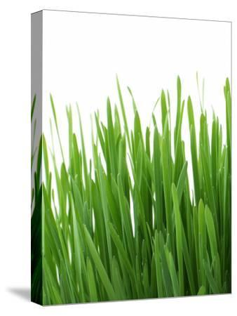 Grass-Grab My Art-Stretched Canvas Print