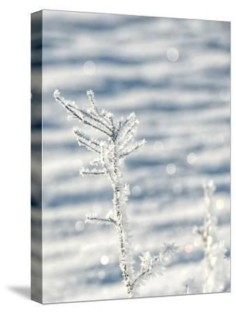 Single Frosty Branch-Grab My Art-Stretched Canvas Print