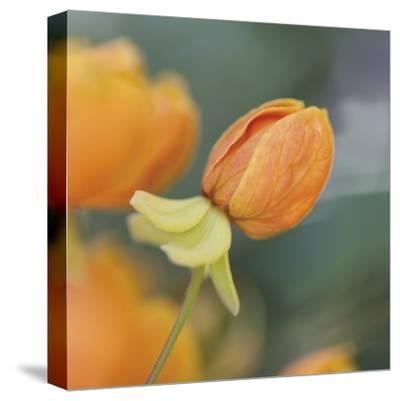 Summer Bloom 2-Florence Delva-Stretched Canvas Print