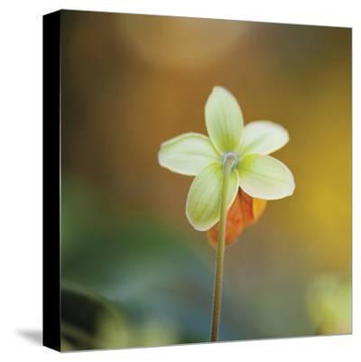 Summer Bloom 3-Florence Delva-Stretched Canvas Print