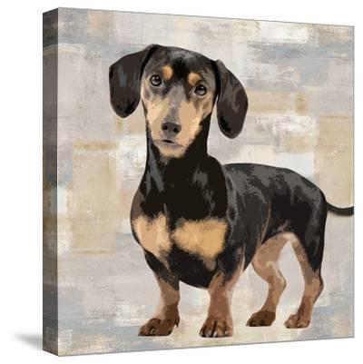 Dachshund-Keri Rodgers-Stretched Canvas Print