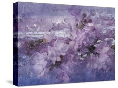 The Smell Of Spring 2-Zina Zinchik-Stretched Canvas Print