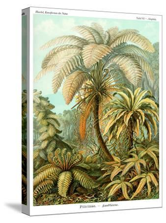 Haeckel Plate 92-Coastal Print & Design-Stretched Canvas Print
