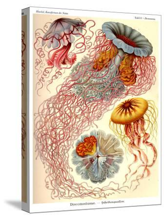 Haeckel Plate 8-Coastal Print & Design-Stretched Canvas Print