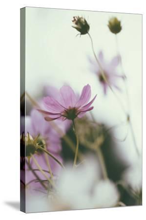 Afterlight-Irene Suchocki-Stretched Canvas Print