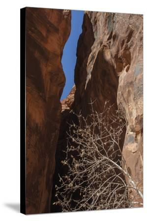 A Shaded Spot-Andrew Geiger-Stretched Canvas Print