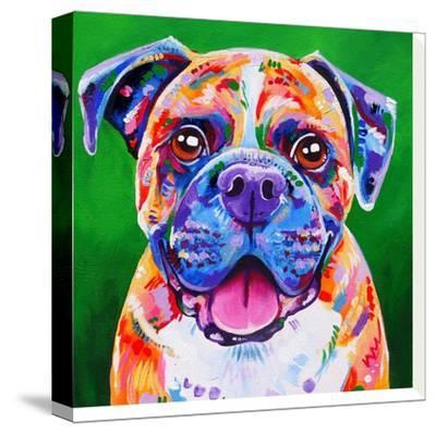 Boxer Dog-Eve Izzett-Stretched Canvas Print