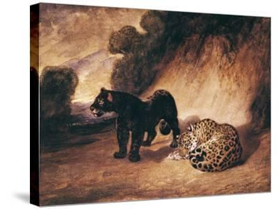 Two Jaguars from Peru-Antoine-Louis Barye-Stretched Canvas Print
