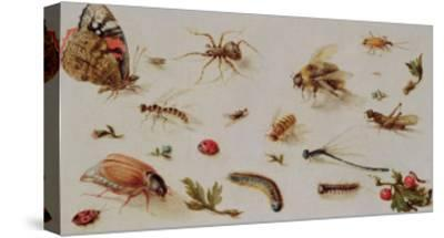 A Study of Insects-Jan Brueghel the Younger-Stretched Canvas Print