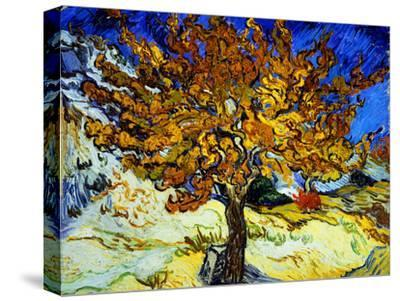 Mulberry Tree, c.1889-Vincent van Gogh-Stretched Canvas Print