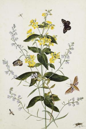 Yellow Loosestrife and Other Wild Flowers-Thomas Robins Jr-Stretched Canvas Print