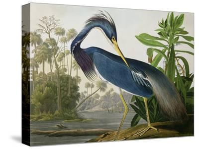 "Louisiana Heron from ""Birds of America""-John James Audubon-Stretched Canvas Print"