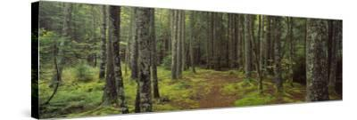Lush Forest, Acadia National Park, Maine--Stretched Canvas Print